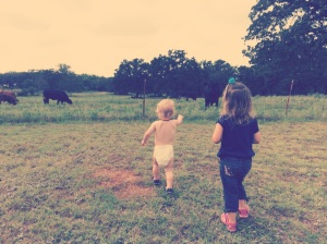 Watching the cows in Texas