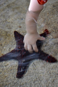 Cliff liked the starfish