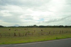 Small farms along the road
