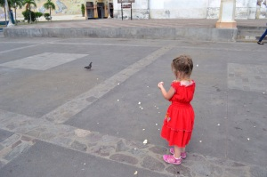 Feeding the birds