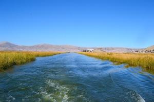 Floating reeds
