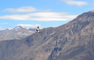 The Condor against the Andes