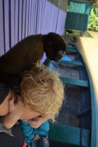 Gotta monkey on your back?